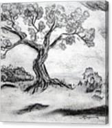 Gnarly Oak Canvas Print