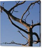 Gnarly Tree Canvas Print