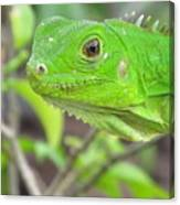 Go Iguana Green 2 Canvas Print