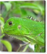 Go Iguana Green Canvas Print