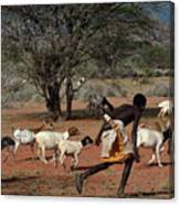 Goat Chase Canvas Print