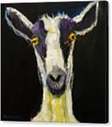 Goat Gloat Canvas Print