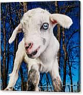 Goat High Fashion Runway Canvas Print