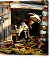 Goat Shed Canvas Print