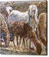 Goat With Sheep Canvas Print
