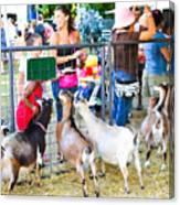 Goats At County Fair Canvas Print