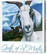Goats Of St. Maarten- Andre Canvas Print
