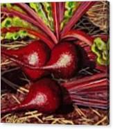God's Kitchen Series No 2 Beetroot Canvas Print