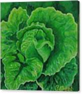 God's Kitchen Series No 5 Lettuce Canvas Print