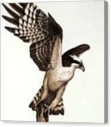 Going Fishin' Osprey Canvas Print