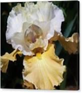 Gold And White Iris Canvas Print