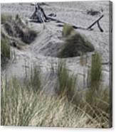 Gold Beach Oregon Beach Grass 15 Canvas Print