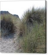 Gold Beach Oregon Beach Grass 5 Canvas Print