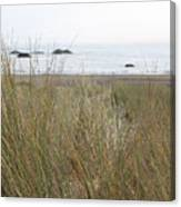 Gold Beach Oregon Beach Grass 7 Canvas Print