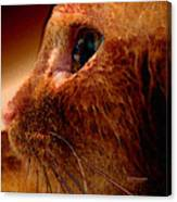 Gold Cat Profile Canvas Print