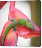 Gold Dust Day Gecko 2 Canvas Print