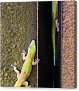 Gold Dusted Day Gecko Canvas Print