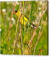 Gold Finches-8 Canvas Print