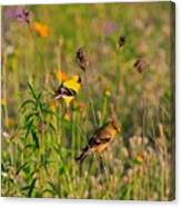 Gold Finches Canvas Print