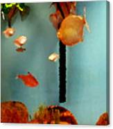 Gold Fish Life Canvas Print