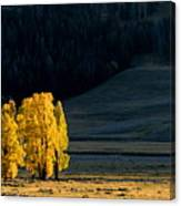 Gold In The Lamar Valley Canvas Print