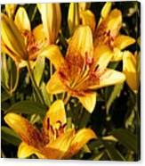 Gold Lilly Canvas Print