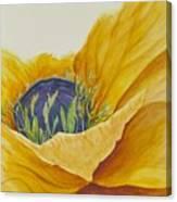 Gold Poppy Canvas Print