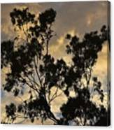 Gold Sunset Tree Silhouette I Canvas Print