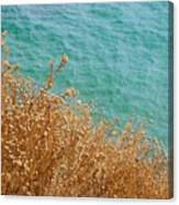Gold Thistles And The Aegean Sea Canvas Print