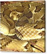 Gold Viper Canvas Print