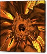 Golden Anemone Canvas Print