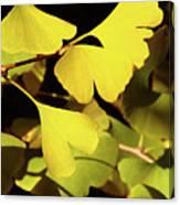 Golden Autumn In Tokyo Canvas Print