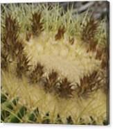 Golden Barrel Cactus Canvas Print