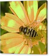 Golden Bee Canvas Print