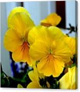 Golden Blooms Beside The Porch Canvas Print