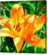 Golden Blossom Canvas Print