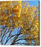 Golden Boughs Canvas Print