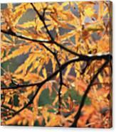 Golden Branch Canvas Print