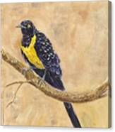 Golden Breasted Starling Canvas Print