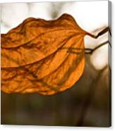 Golden Briar Leaf Canvas Print