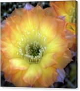 Golden Cactus Bloom Canvas Print