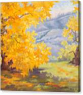 Golden California Sycamores Canvas Print