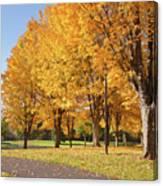 Golden Colors In Autumn Bellavista Park Oregon. Canvas Print