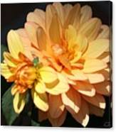 Golden Dahlia With Bud Canvas Print