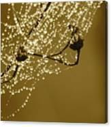 Golden Dewdrops Canvas Print