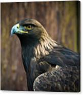 Golden Eagle 5 Canvas Print