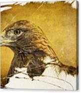 Golden Eagle Grunge Portrait Canvas Print