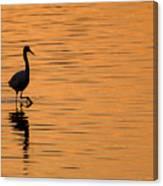 Golden Egret Canvas Print