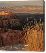 Golden Evening Light Bryce Canyon 1 Canvas Print