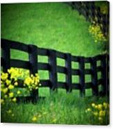 Golden Fence Canvas Print